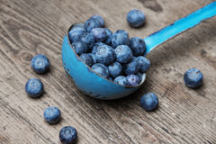A ladle with blueberries Stock Image