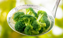 Ladle full of steamed fresh young broccoli florets Royalty Free Stock Photo