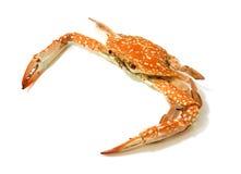 Lado da foto dos caranguejos e vista superior cozinhados no fundo branco Imagem de Stock