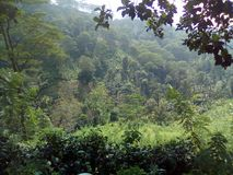 lado de la colina en Sri Lanka fotos de archivo libres de regalías