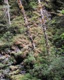Lado de la montaña después de fuertes lluvias Fotografía de archivo
