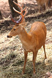 Lado de los ciervos salvajes. Fotos de archivo