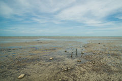 Lado de mar fangoso de la marea baja en Malasia Imágenes de archivo libres de regalías