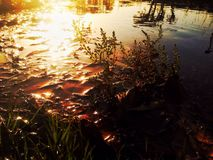 Lado de uma lagoa Foto de Stock Royalty Free