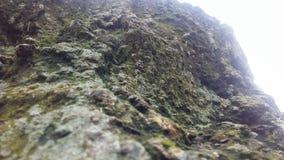 Lado del acantilado o tocón de árbol foto de archivo libre de regalías