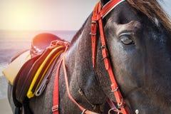 Lado del caballo negro Foto de archivo libre de regalías
