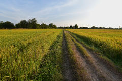 Lado del país del campo del arroz en Asia Imagen de archivo libre de regalías
