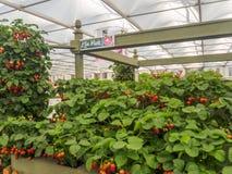 Lado derecho Chelsea Flower Show 2017 El ` s del mundo la mayoría de la exhibición floral prestigiosa que exhibe el mejor en dise Imagen de archivo libre de regalías