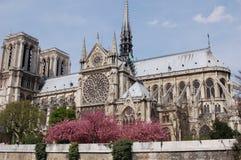 Lado do Notre Dame de Paris Fotos de Stock Royalty Free