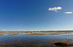 Lado do pântano Imagens de Stock