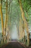 Lado-estrada bonita em Açores foto de stock royalty free