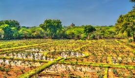 Lado Sarai花托儿所,一个玫瑰园在德里,印度 免版税库存照片