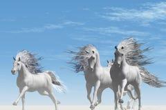 Lado selvagem Imagens de Stock Royalty Free
