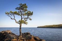 Ladoga与矮小的杉木的湖风景 免版税库存照片