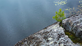 Ladoga lake, coastal landscape. Pine tree in stone Stock Photos