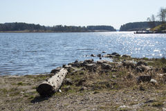 Ladoga lake in Karelia. Ladoga lake in spring Karelia Stock Photo