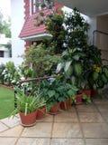 Lados de las plantas agradables ver Fotos de archivo libres de regalías