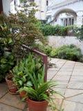 Lados de las plantas agradables ver Imagenes de archivo