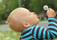 Lados do scatter das sementes do dente-de-leão dos sopros do menino foto de stock royalty free