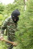 Ladrão no jardim Fotografia de Stock