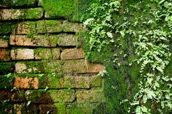 Ladrillo viejo de la pared con el musgo y el helecho Fotografía de archivo