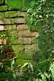 Ladrillo viejo de la pared con el musgo y el helecho Fotografía de archivo libre de regalías