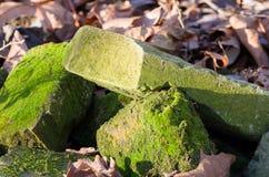 Ladrillos cubiertos de musgo verdes Fotos de archivo