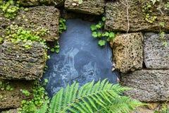 Ladrillos rodeados piedra lisa negra de la piedra pómez Pequeñas plantas de la flor Fotografía de archivo
