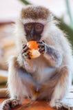 Ladro arancio Fotografia Stock