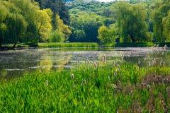 Ladscape: πράσινα δέντρα στο δάσος που απεικονίζει στο νερό Στοκ εικόνα με δικαίωμα ελεύθερης χρήσης