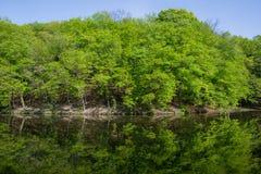 Ladscape: πράσινα δέντρα στο δάσος που απεικονίζει στο νερό Στοκ φωτογραφία με δικαίωμα ελεύθερης χρήσης