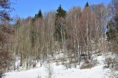 Ladscape av Jeseniky i vinter arkivfoto