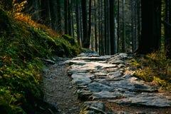 Ladscape della montagna con il percorso e gli alberi Fotografia Stock