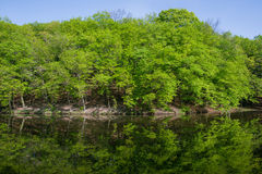 Ladscape: green trees in forest reflecting in water Royalty Free Stock Photo