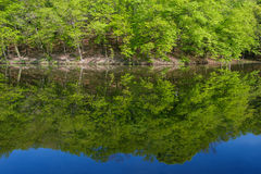 Ladscape: green trees in forest reflecting in water Royalty Free Stock Photography