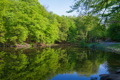 Ladscape: green trees in forest reflecting in water. Of pond in sunny day Stock Images