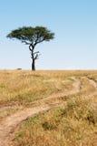 Śladu i drzewa Masai Mara plais Kenja Afryka Fotografia Stock