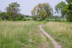 Śladu omijanie przez zwartych traw Fotografia Stock