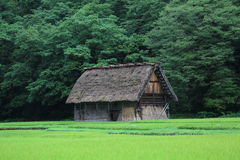 Ladugård av bonden i Japan Royaltyfria Bilder