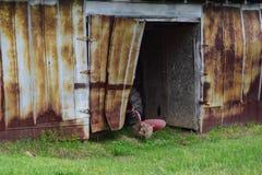 Ladugård för fam för västra NC-berg lantlig med den öppna dörren royaltyfri fotografi