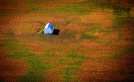 Ladugård för flyg- sikt i färgrikt fält Royaltyfri Foto