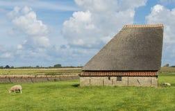 Ladugård på ön av Texel Royaltyfri Bild