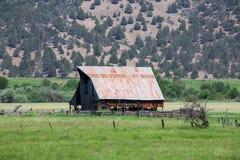 Ladugården i gräsplan betar Royaltyfria Bilder