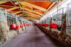 Ladugården med burar Arkivfoton
