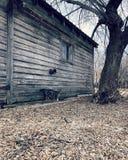 Ladugårdkatten och ladugården arkivfoton