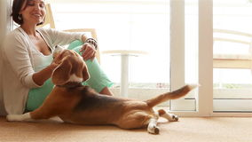 Lady affectionately stroking her beagle dog. 