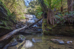 Lady Barron waterfall cascading down the rocks at Mount Field Na Stock Image