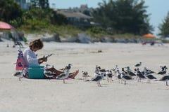 Lady on beach with seagulls stock photos