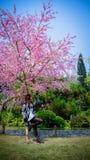 Lady and beautiful sakura Stock Photos