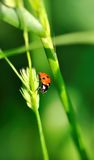 Lady beetle Stock Images
